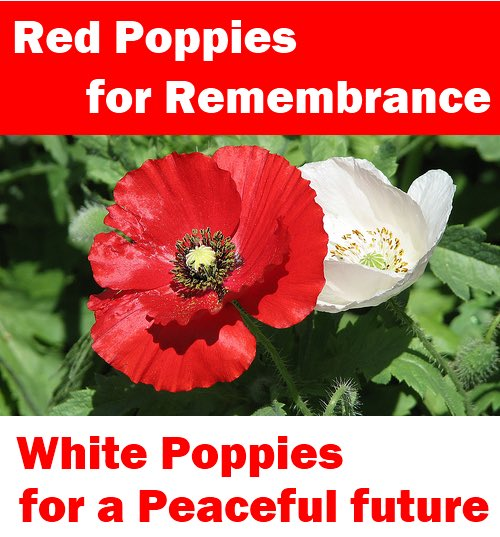 white-and-red-poppies